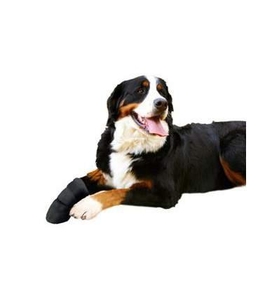 Chaussure de protection - Accessoires pour chien